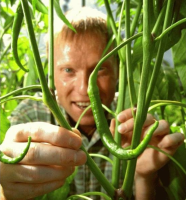 Richard Alker The Chilli Man from Little Green Men Holding Green Chillies in the Press and Media