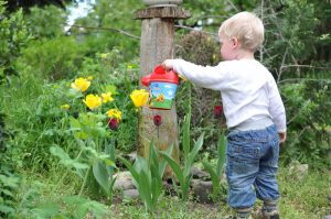 A child watering Kids Gardening Edible Flowers with children's laughter with RK Alker Children's Author Chilliman Grower Food Evangelist Cook from Little Green Men Chilli, Chorley, Lancashire, England, UK, Tel. 01772970190